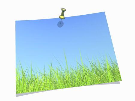 Fresh green grass on blue sky background photo