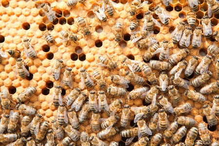 many bees on honeycombs photo