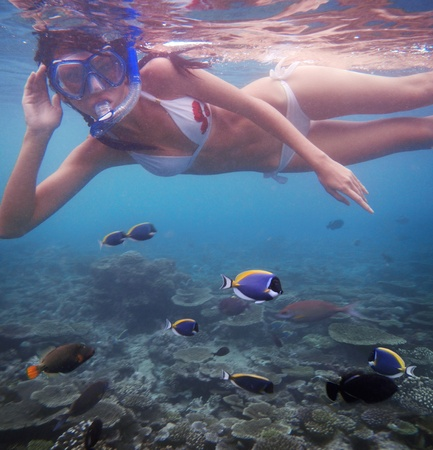Young woman swimming with fishes on coral reef in blue water