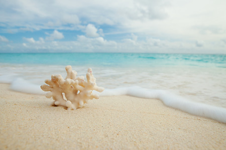 Coral on the beach photo