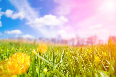 sunny day: Spring meadow on bright sunny day