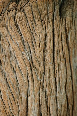 Texture Of old Wood dark brown color photo