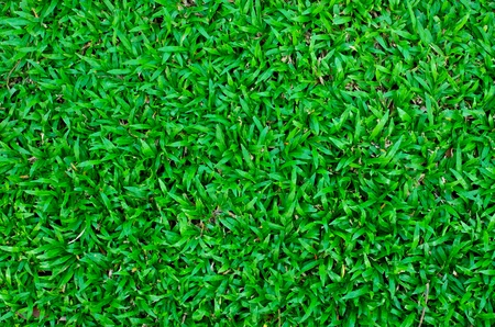green grass field background in park photo