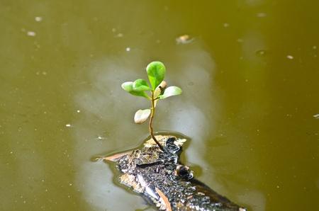 Single green leaf on dry branch in sewage