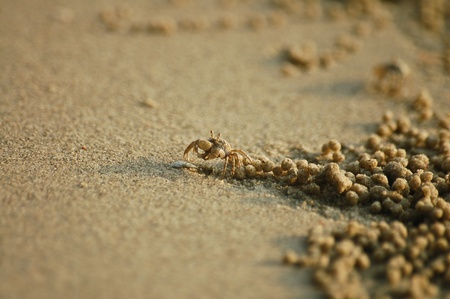 inconspicuous: Ghost crab is on the beach in Thailand