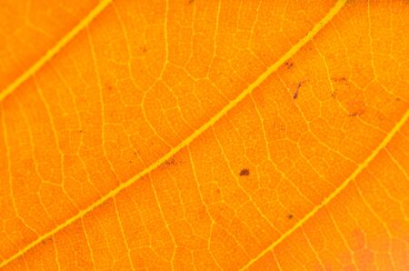 Colorful background of autumn leaf Stock Photo