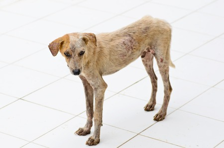 lepra: perro lepra