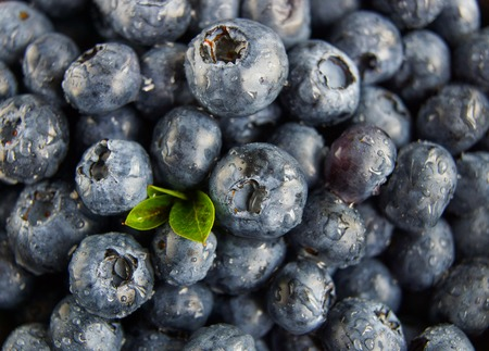 wildberry: Blueberries with drops of water close-up