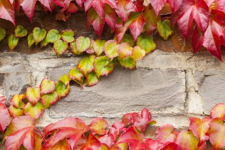 hojas de colores: