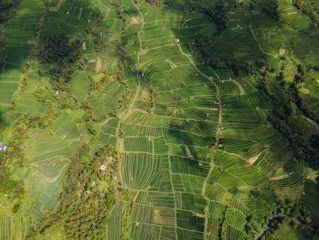 Drone view of amazing landscape Jatiluwih green cascade rice plantation terraces in Ubud, Indonesia. Bali Landmark. Holiday travel destination. Tegalalang. High quality photo