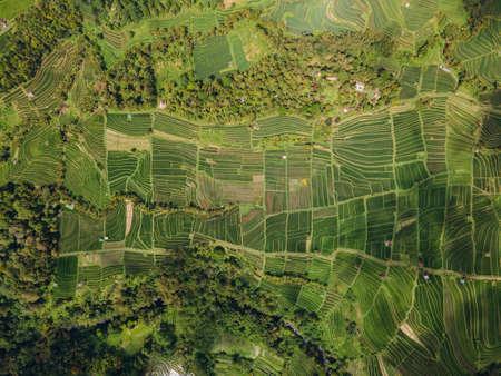 Drone view of Jatiluwih green rice Terraces in Ubud, Indonesia. Bali Landmark. 版權商用圖片
