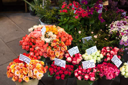 Outdoor flower market with red orange pink roses in Vienna, Austria Imagens