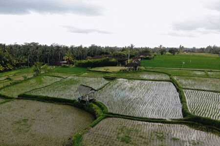 Abstract geometric shapes of agricultural parcels in green color. Bali rice fields with water. Aerial view shoot from drone directly above field