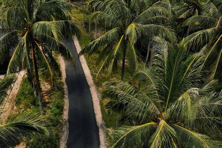 Aerial view of palm trees along the road somewhere in Nusa Penida Bali Indonesia