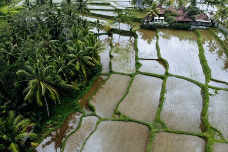Rice Terrace with water Aerial Shot. Image of beautiful terrace rice field in Ubud area, Bali, Indonesia. Imagens