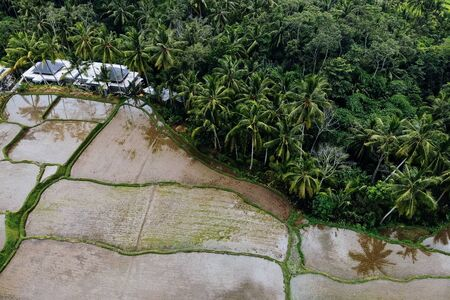 Rice Terrace Aerial Shot from drone. Image of beautiful terrace rice field with water and palm trees in Ubud, Bali, Indonesia