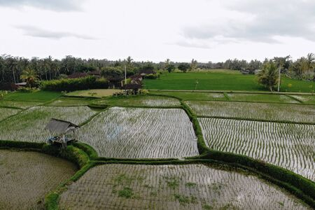 Abstract geometric shapes of agricultural parcels in green color. Bali rice fields with water. Aerial view shoot from drone directly above field.