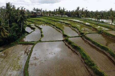 Abstract geometric shapes of agricultural parcels in green color. Bali rice fields with water and palm trees. Aerial view shoot from drone directly above field