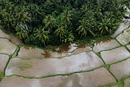 Rice Terrace with water and palm trees jungle Aerial Shot. Image of beautiful terrace rice field in Ubud area, Bali, Indonesia.