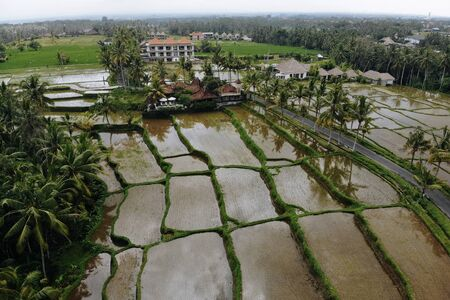Abstract geometric shapes of agricultural parcels in green color. Bali rice fields with water and palm trees. Aerial view shoot from drone directly above field.