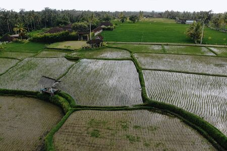 Aerial view top view of the green rice fields with water in Ubud area. Bali, Indonesia. Photo from drone