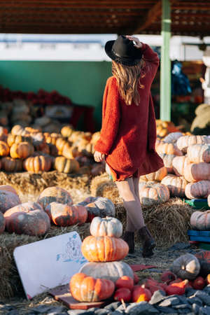 Back view of unrecognizable woman in brown cardigan and black hat on farmers market among stack of different orange pumpkins. Cozy autumn vibes Halloween, Thanksgiving day