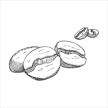 coffee beans isolated: Engraving illustration of some coffee beans isolated on white background