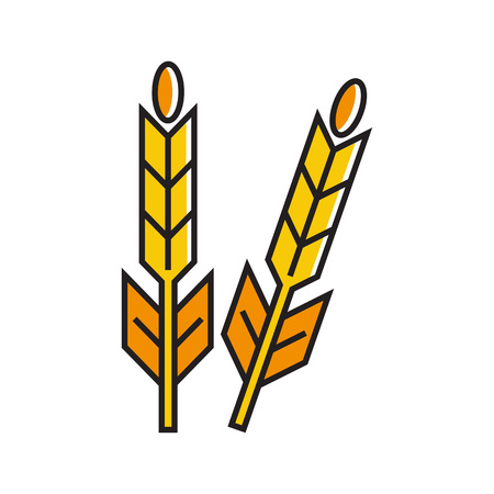harvesting: Wheat ears illustration. Plant, harvest, nature. Harvesting concept. Can be used for topics like plant, nature, harvesting