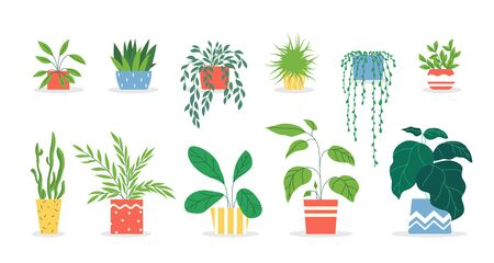 Potted plants set. Houseplants in colorful pots, succulent, home garden, indoor trees. Vector illustration for interior, botany, house decoration concept