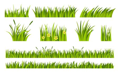 Green grass patterns set. Green lawn, flower, natural borders, herbs. Flat vector illustrations for summer, nature, ground, plants concept
