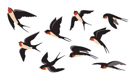 Flying swallows set. Different view of colorful wild birds flight. Vector illustration for freedom, wildlife, animal, ornithology concept