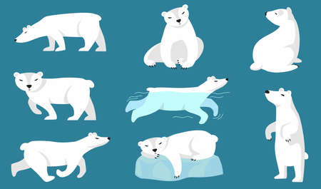 Polar bear set. Cute white arctic bear walking, running, swimming, sitting, sleeping on ice. Vector illustration for zoo, winter character, northern wild animal concepts 向量圖像
