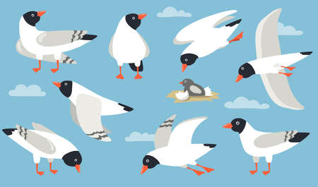 Atlantic gull set. Cartoon sea bird flying in sky, hatching, standing, pecking. Cartoon illustration for beach seagull, wildlife, seaside, port concept
