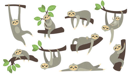 Cute sleepy sloth on branch flat icon set. Cartoon character of little sloth hanging, sleeping, lying or playing with baby isolated vector illustration collection. Animal and zoo concept