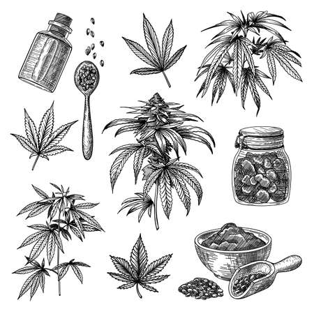 Cannabis or hemp engraved illustrations set. Hand drawn sketch of marijuana plant isolated on white background. Medical herbs, drug, nutrition concept