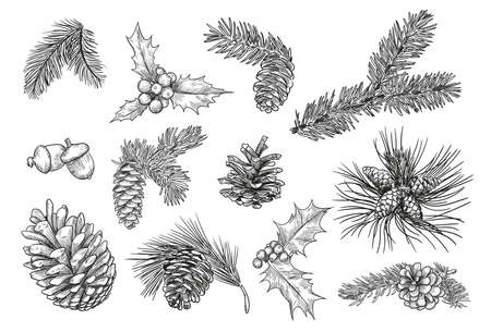 Pine branches isolated hand drawing vector illustration set. Engraved mistletoe, fir or spruce cones and leaves vintage sketch. Plants and Christmas concept