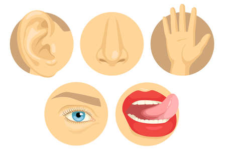 Cartoon set of human sense organs flat vector illustration. Five senses of touch, sight, smell, taste, hearing with hand, eye, nose, tongue, ear colorful images. Anatomy, body, perception concept