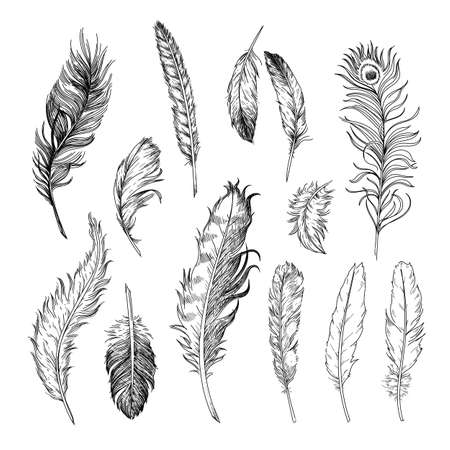 Different feathers of birds engraved illustrations set. Hand drawn vintage ink sketch of bird quills isolated on white background. Birds, tattoo concept Vector Illustratie
