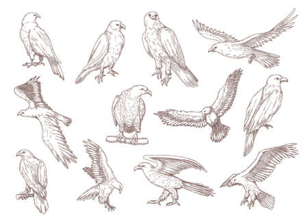 Eagle birds hand drawn sketches. Falcons, hawks and other predator birds sitting and flying vector engraving illustrations in vintage style. Animal, American symbol, freedom concept for designs 向量圖像