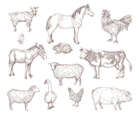 Domestic animals hand drawn illustrations set. Horse, cow, goose, hen, chicken, rooster, pig, goat, donkey rustic engraving collection of sketches. Farm, animal concept for flyer, booklet design Ilustración de vector