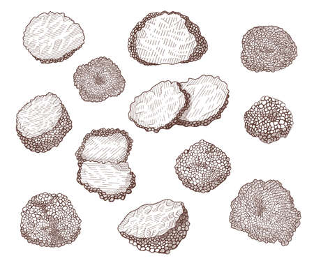 Truffle mushroom hand drawn illustrations set. Whole and sliced delicious luxury delicatessen engraved vector collection 向量圖像