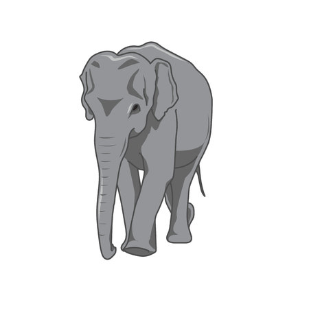 herbivorous animals: vector illustration elephant Illustration