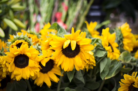 Picture of sunflowers at a street fair Banco de Imagens