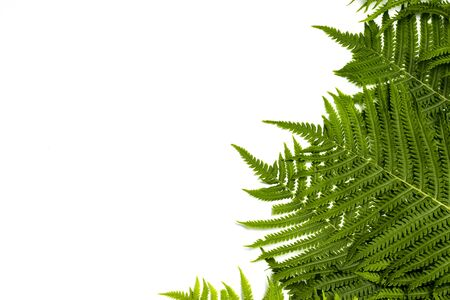 Fern leaves or palm trees on a white isolated background. Concept of the tropics. Copy space. Flat lay, top view. Stock Photo