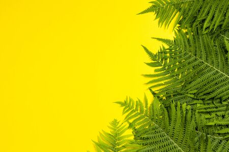 Fern leaves or palm trees on a yellow background. Concept of the tropics. Copy space. Flat lay, top view. Stock Photo