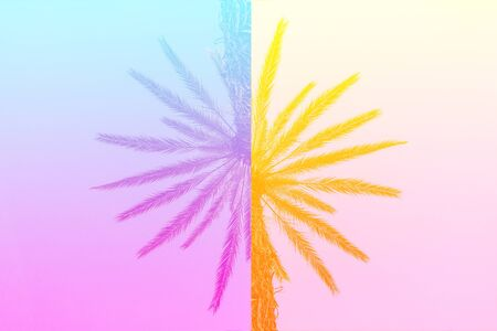 Silhouette of palm trees with a bright summer gradient on a bright blue background of the summer sky. Mirror reflection. Concept tropic, vacation and travel. Abstraction.
