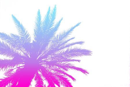 Silhouette von Palmen mit einem hellen Sommerverlauf auf einem strahlend weißen Hintergrund. Tropen-, Urlaubs- und Reisekonzept. Standard-Bild