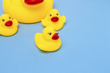 Rubber toy of yellow color Mama-duck and small ducklings on a blue background. The concept of maternal care and love for children, the upbringing and education of children. 写真素材
