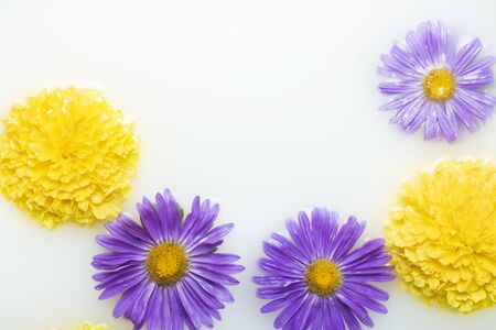 Beautiful flowers in a milk bath. Concept of spa treatments, relaxation, spa treatments, therapy. Banque d'images