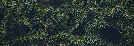 Christmas tree branches. The concept of the new year, christmas, nature. Banner. Flat lay, top view. Banco de Imagens - 133462388